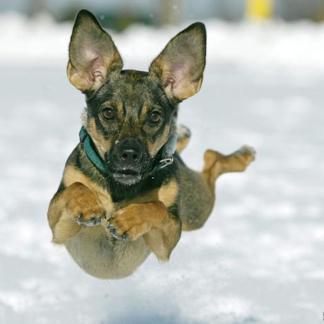 Otočac, 24.01.2004 - My dog Ela Canon EOS1D, Canon EF 70-200mm f2.8 L USM 1/1600 sec, f6.3, ISO 200 ASA